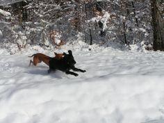 chasser dans le neige