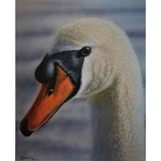 #swan #myart #animal #see #art #paintings #acrylicpainting #acrylic #wetterau #Hessen #Germany #Deutschland #Malerei #inheinden