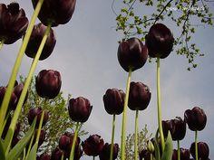 Tote Tulpen von Jaromir Konecny Flexibler Einband, 240 Seiten Erstausgabe : 01.04.2014 DTV Verlag ISBN: 9783423740043 Die Entscheidung für die Reise mit den Tulpen war eher eine zögerliche. Wie das…