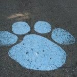 Citadel Bulldog pawprints....how we knew we were almost there!!