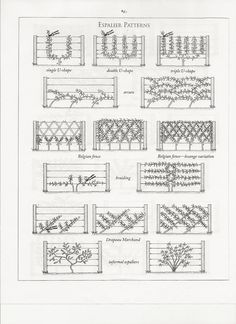 espalier patterns. I saw lemon trees in a simple espalier along a 3' planting strip between a fence and the driveway. Clever use of space and what's not to love about citrus!