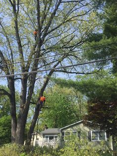 15 Best Tree Removal How Not To Do It Images Giant