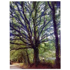 The tree of life #ELCAMINO #Positive #SimpleLife - - - #TakeMeTo #CaminoDeSantiago #Compostelle#Galicia#travel#explore#Grateful#adventure#Travelwanderlust#europe#instaeurope#tripadvisor#beautifuldestinations#blog#blogger#natgeotravel#topspainphoto#visitspain#cntraveler#igspain#trekking#stjames#pilgrim#santiagodecompostela #compostela…