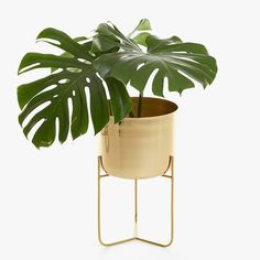 Image of the product GOLDEN PLANT POT