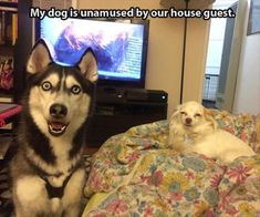 Funny Animal Pictures 25 Pics