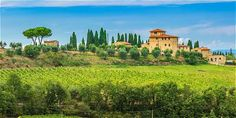 Los viñedos y cultivos de girasoles acompañan al viajero durante su recorrido por la Toscana.