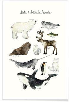 Arctic and Antarctic Animals als Premium Poster | JUNIQE