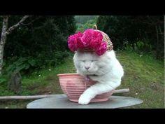 Over twelve delightful minutes of things on kitty heads (shironekoshiro)  http://kagonekoshiro.blog86.fc2.com/blog-entry-5615.html