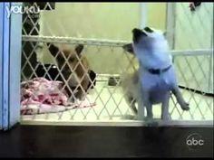 funny dog jail break