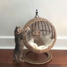 Pin on Cat room ideas Pin on Cat room ideas I Love Cats, Crazy Cats, Cute Cats, Cute Baby Animals, Funny Animals, Animals Dog, Animal Room, Pet Furniture, Apartment Furniture