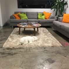 When you are part dog but also part rug…. Don't blend into the background ;) For a marketing plan that sticks out from the crowd (and lounge) call our team on (07) 3040 1227.