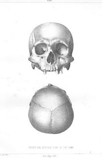 Large Human Skeletons Found in Mounds Near Chillicothe, in Ross County, Ohio