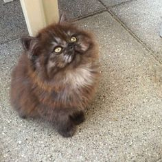 cute kitten                                                       …