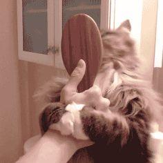 15 Gatos demonstrando seu amor pelas mamães humanas! | amo gatinhos