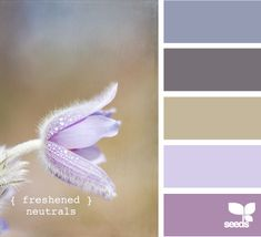 Finding colour palettes at Design Seed - this could be slightly addictive! #colour