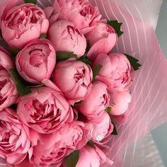 something special ♡ Peonies And Hydrangeas, Peonies Garden, Peonies Bouquet, Bouquets, Types Of Flowers, Beautiful Flowers, Spring Flowers, Wild Flowers, Flower Aesthetic