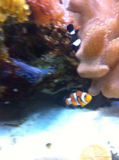 Nemonas...Nemo!!