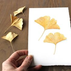 This is a delicate original watercolour painting of two ginkgo leaves. We don't have a Ginkgo biloba tree but our neighbours do. I am always happy when some of the beautiful yellow leaves end up in ou Watercolor Cards, Watercolor Paintings, Watercolour, Painted Paper, Hand Painted, Leaf Outline, Art Assignments, Motif Vintage, Leaf Drawing