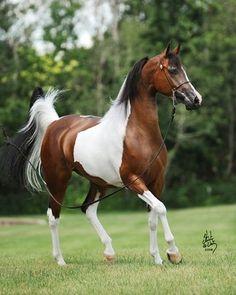 Beautiful painted horse.