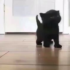 Little black kitten - Cool Cat Tree House - Animaux mignons - Gatos Cute Baby Cats, Cute Little Animals, Cute Cats And Kittens, Cute Funny Animals, Kittens Cutest, Cute Kitten Videos, Funny Cats, Kittens Meowing, Fluffy Kittens