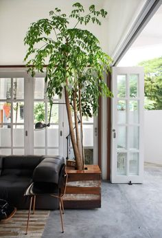 A 60-year Old Terrace House Gets A Renovation