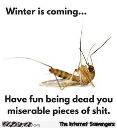 56 Best Funny Mosquito Images Funny Stuff Funny Things Hilarious