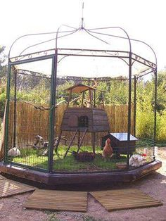 Chook & Bunny Pen --- This is how we should use one of our older gazebo frames!!!