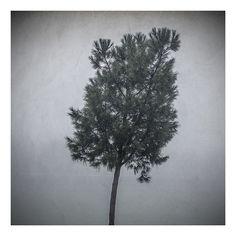 Ikebana | Color. Niebla. Árbol. Vegetación. Chinchón