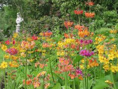 In pictures: Scotland's beautiful gardens - Scotland Now Newtownairds Dumfrieshire