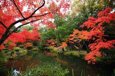 高画質 等寺院 紅葉 心字池 写真 秋 京都