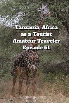 Tanzania, Africa as a Tourist – Amateur Traveler Episode 51 - The Amateur Traveler goes to Tanzania. This first of two episodes on Tanzania looks at Tanzania as a tourist and focuses on three national parks: Lake Manyara, Ngorogoro and Tarangire. It also focuses on the Masai people and includes soundseeing clips.
