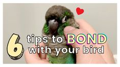 6 TIPS ON HOW TO GET ALONG AND BOND WITH YOUR BIRD | How to Bond with Your Bird - YouTube Bird Toys, Cat Toys, Animals And Pets, Bond, The Creator, Parakeets, Tips, Youtube, Videos