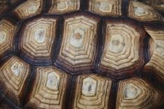 Turtle Shell Close Upzx zxzxzx zx zx zxzxzx zx         x