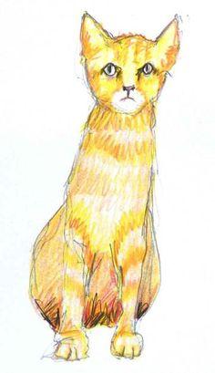 gelbe-Katze