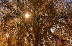 Light Shines #photography #card #print #canvas #nature #autumn #Fall #foliage #tree #leaves