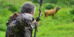 When shooting field archery, always consider how wind affects your arrows. Wind can range from gentle, refreshing breezes to strong, unpredictable gusts. Learning to judge the speed and direction of wind and their effect on accuracy can keep your arrows on course during windy conditions. Tim Gillingham, a Hoyt pro-staff shooter, says windy conditions are […] - https://www.archery360.com/2013/09/10/archery-how-to-shoot-in-the-wind/
