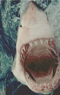 Fish are friends, not food. #SharkBait