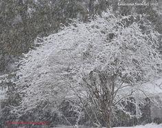 Ya'll! It's snowing in Louisiana. Right now!