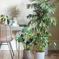 sfgirlbybay / bohemian modern style from a san francisco girl Indoor Garden, Indoor Plants, Indoor Trees, Rattan, Trends 2016, Turbulence Deco, Style Deco, Office Plants, Blog Deco