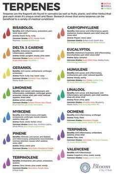 Terpenes found in cannabis and their benefits - Faraway Land Seed Bank Ayurvedic Herbs, Healing Herbs, Holistic Healing, Marijuana Recipes, Cannabis Edibles, Weed Recipes, Medical Benefits Of Cannabis, Medical Marijuana, Planta Cannabis