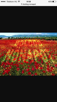 Boldog nőnapot kívánunk minden hölgy követőnknek, támogatónknak, munkatársunknak! #nonap #boldognonapot #alapitvany #followmeplease #followme #foundation #alapítvány #singer #magyar #music #hungarian #cultural #cultura #kultúra #virag #boldogsag