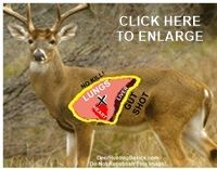 Whitetail Deer Shot Placement Diagram 2006 Ford Escape Door Wiring 82 Best And Anatomy Where To Shoot A Images Hunting Girls Bow Stuff Shooting Illustration