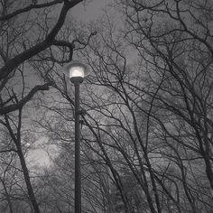 【pleasant_beat】さんのInstagramをピンしています。 《Monochrome Winter Image🌲, #night #nightview #forest #sky #monochrome #landscape #monotone #tree #photo #instapic #instaphoto #instagood #instanature #instanight #winter #japan #monogram #lamp #nature #landscape_lovers #森 #木 #公園 #自然 #冬 #白黒 #灯 #風景》