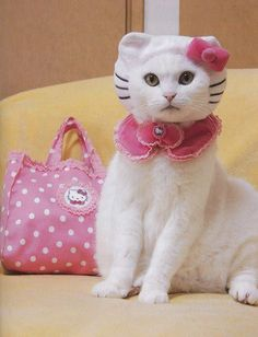 uma gatinha
