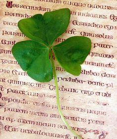 Irish.