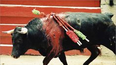 Petition: Ban bullfighting in Spain Stop Animal Cruelty, Animal Testing, Prime Minister Of Spain, Animal Action, Bull Riding, Vegan Animals, Dog Fighting, Anti Bullying, Animals Of The World