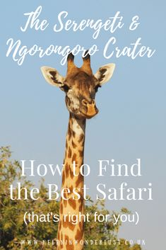 How to find, plan and book the Serengeti & Ngorongoro Crater safari that's right for you, including when to go, where to stay, duration & who to go with! Solo Travel, Travel Tips, Travelling Tips, Budget Travel, Africa Destinations, Travel Destinations, Animal Experiences, Serengeti National Park, Small Group Tours