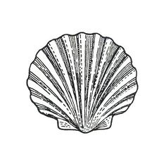 Unmounted Rubber Stamp  - Seashell 10  - Scallop