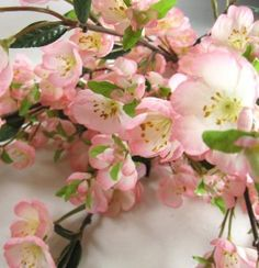 Apple Blossoms...I'm longing for Spring...