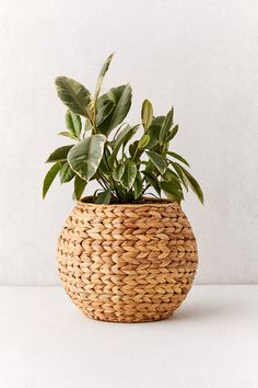 If you're looking to add another layer of texture to your space this woven planter basket will do just that. Unlike with a traditional planter you don't pot your plant directly in it; instead place it in the basket after it's been potted. Decoration Plante, Basket Decoration, Plant Basket, Deco Boheme, Bedroom Plants, Blooming Plants, Cactus Y Suculentas, Snake Plant, Plant Decor